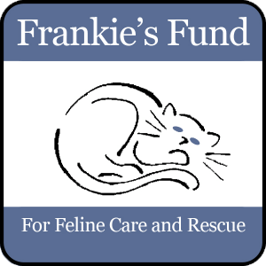 Adopt a cat in NYC New York: Frankie's Feline Fund